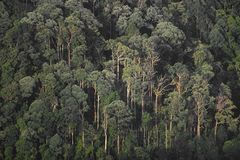 Forest, nature landscape view of tropical forest with layers of. Tree stock image