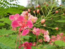 Flower, pink. Forest nature naturalistic native Background Royalty Free Stock Photography