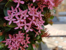 Flower, pink. Nature naturalistic native Background royalty free stock image