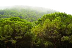 Forest nature of Spain Royalty Free Stock Photos