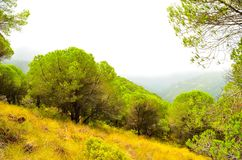 Forest nature of Spain Stock Image