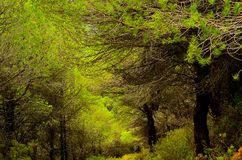 Forest nature of Spain Stock Images