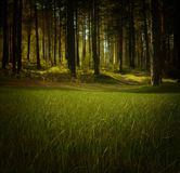 Forest, Nature, Trees, Grass Royalty Free Stock Photo