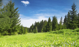 Forest and Nature Vegetation Landscape Royalty Free Stock Photography