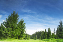 Forest and Nature Vegetation Landscape Royalty Free Stock Photo