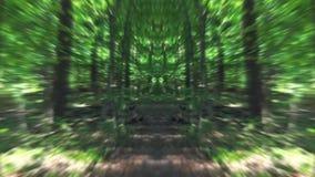 Forest Nature Walk vert de la confusion banque de vidéos