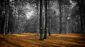 Forest, Nature, Woodland, Tree Stock Photography