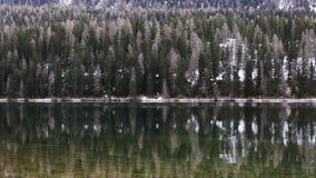 Forest near Lake St Moritz in Switzerland stock video