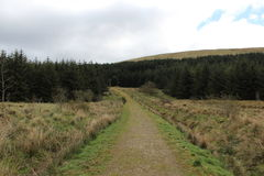 Forest near lennoxtown village. Forest road near village of lennoxtown in campsie hills Stock Image