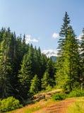 Forest near Mount Rainier`s Box Canyon Stock Photo