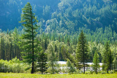 Forest near the river Kucherla. Trekking in the Altai Mountains Royalty Free Stock Images