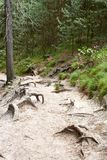 Forest near ruin of the Valdstejn gothic castle Stock Images