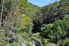 Forest near Scranton, Pennsylvania. Trees in sunny forest near Scranton, Pennsylvania Royalty Free Stock Photo