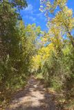 Forest near the source of the river Palancia. Bejis. Castellon Stock Images