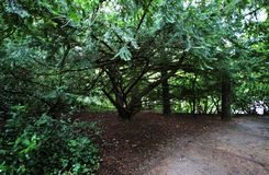 Forest near Tipperary, Ireland Stock Photos