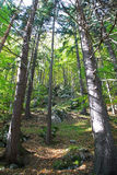 Forest near town Ruzomberok Stock Image