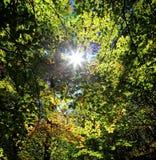 Forest near town Ruzomberok Royalty Free Stock Photography
