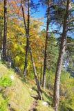 Forest near town Ruzomberok Royalty Free Stock Photo