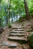 Forest near village Mala Skala, Bohemian Paradise Royalty Free Stock Photo