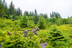 Forest near Voringsfossen waterfall - Norway Royalty Free Stock Image