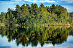 Forest near the water Stock Photography