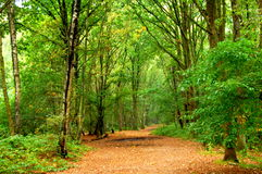 Forest in the netherlands. A photo of a road in the forest in the netherlands Royalty Free Stock Images