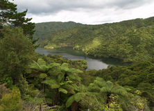 Forest in New Zealand Stock Image