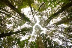 Forest, New Zealand Stock Images