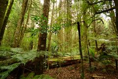 Forest, New Zealand Stock Photography