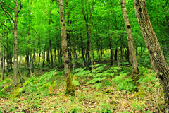 Forest. Nice forest ,mountain in greece stock images
