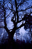 Forest at night, branches against the sky Royalty Free Stock Photography