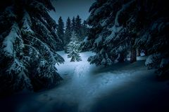Forest at night coverd with snow royalty free stock photos