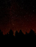 Forest at Night. Forest Foreground with night sky background Stock Photo