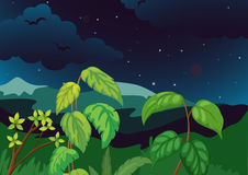 Forest at night Stock Image