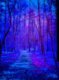 Aliens Coming in dark blue and purple forest. A forest at night with moon lighting the path and eery lights coming from above. spooky, fear, alien Stock Images