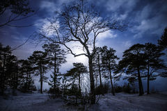 Forest at night with moonlight Stock Images