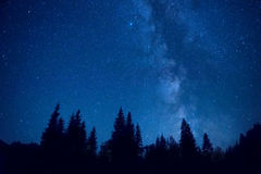 Forest at night royalty free stock images