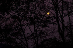 The forest at night Royalty Free Stock Images