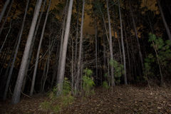 Forest at Night. A view of a forest at night royalty free stock images