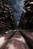 Forest at Night. Winter in the woods at night royalty free stock image