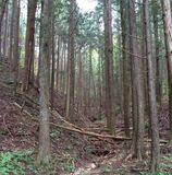 Forest in Nikko Royalty Free Stock Images