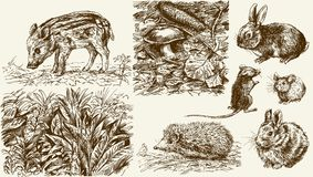 Forest nook. Wild animals. Hand drawn set Stock Photos