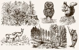 Forest nook. Wild animals. Hand drawn set Stock Image
