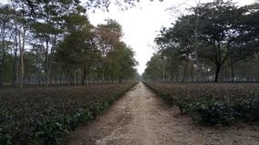 Forest in North Bengal Royalty Free Stock Photos