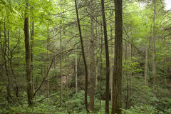 Forest in north carolina Stock Photo