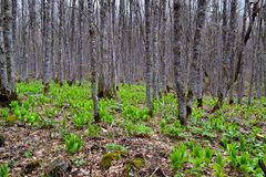 Forest North Ossetia. Travel in Alagir region of North Ossetia. Photo taken on: May 10 Sunday, 2015. I have a file in the RAW format of the image Stock Photo