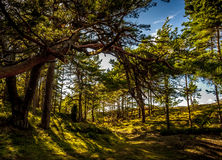 Forest in northern Poland Royalty Free Stock Images