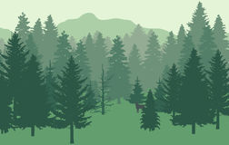 Forest nr1 green fir. Fir-forest, mountains in a foggy forest stock illustration