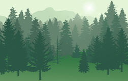 Forest nr2 green with sun. Fir-forest, mountains in a foggy forest Stock Photo