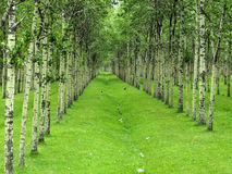 Forest. Nursery Trees Green grass Woodland Royalty Free Stock Photo